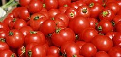 العراق يفتح استيراد محصول الطماطم بكميات مقننة ولمدة محدودة